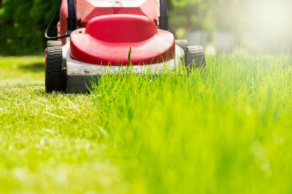 mowing-the-lawn grass