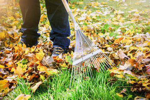 raking leaves from yard for winter