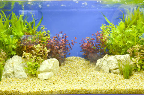 empty fish tank with gravel and plants