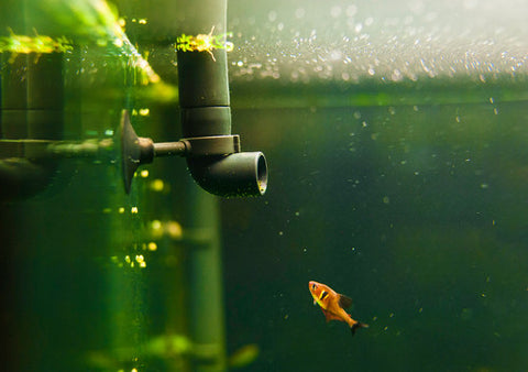 fish tank pipe with fish filter