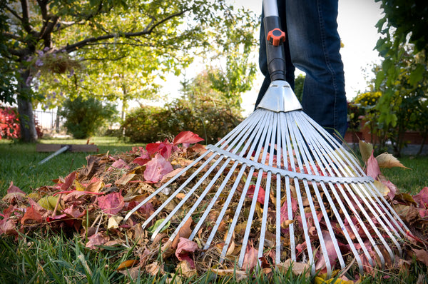 raking-the-lawn leaves