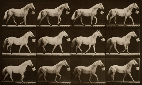 Muybridge grey horse walking with bucket