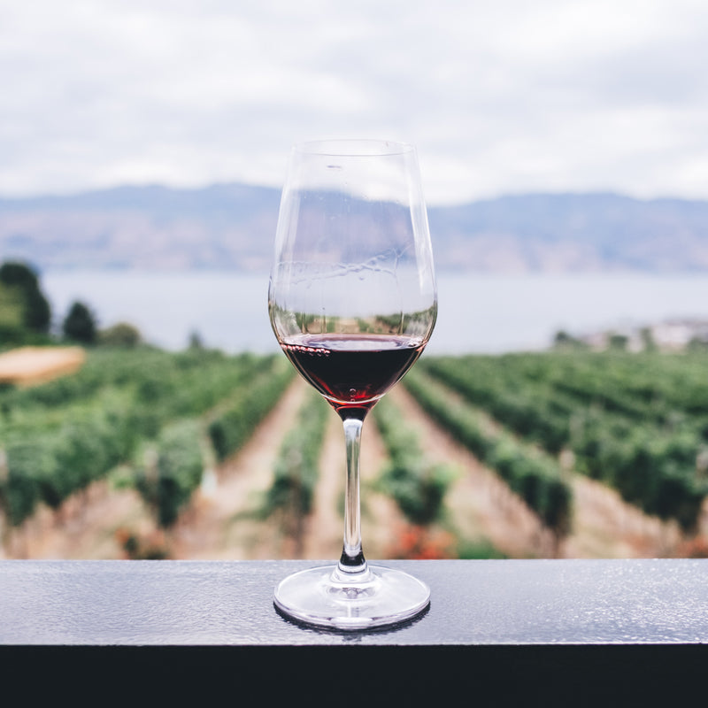 The Ultimate Guide to Wine Tasting and Traveling