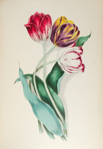 Clarissa Munger Badger, lithograph of tulips