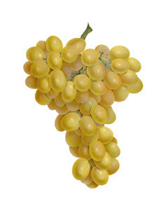 Grape l Wine Grape l Purpleleaf Grape l Common Grape l Vitis vinifera 4