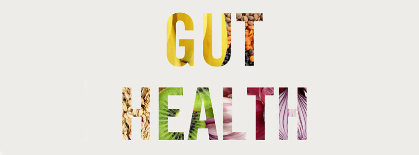 Curious about Foods Good for Gut Health?