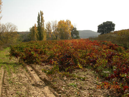 Abel Mendoza vineyard in autumn - natural wine from Rioja
