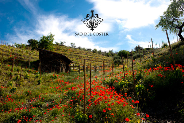 Beautiful vineyards at Sao del Coster: Priorat wines low in sulphites