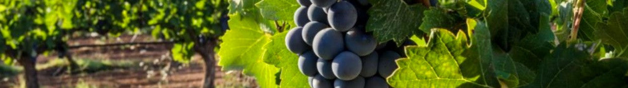 organic wines are nutritional and taste delicious