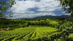 Panoramic view of Italian vineyards