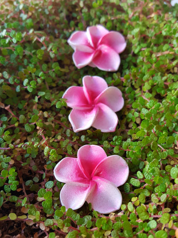 Flower Stepping Stones - Pink
