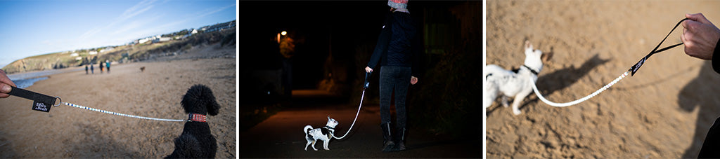 Disco Dog Leads - Funky up your Dog with this amazing safety dog lead