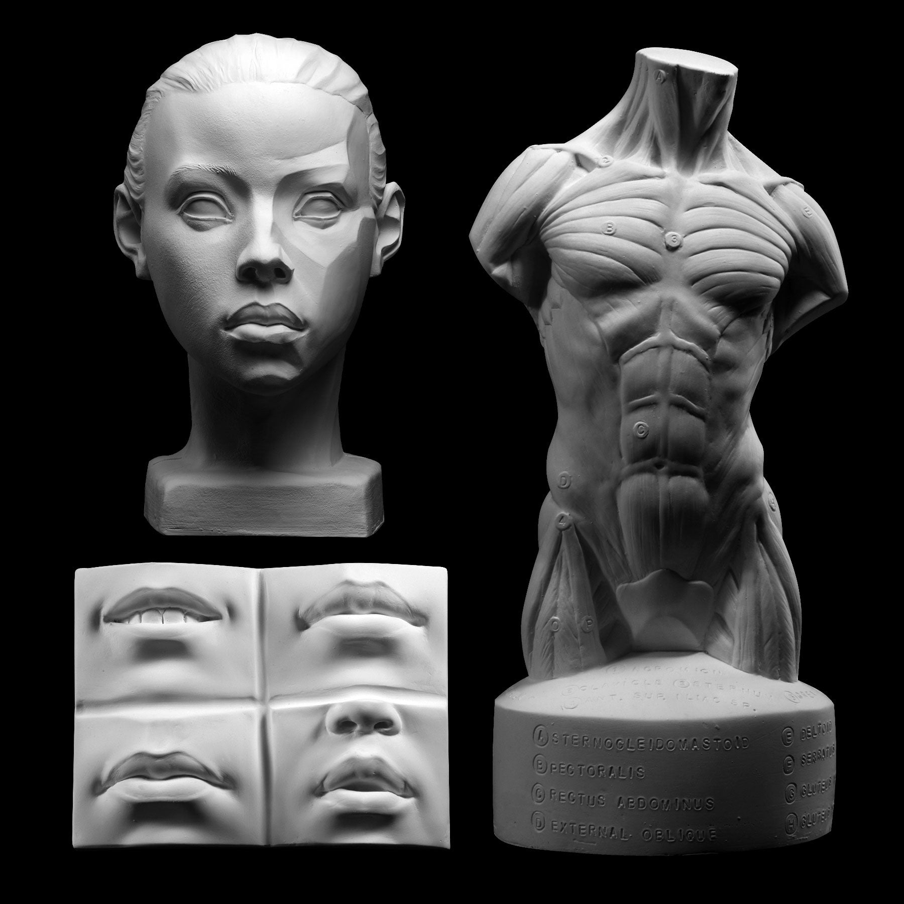 Plaster art reference casts for drawing and sculpting by Faraut