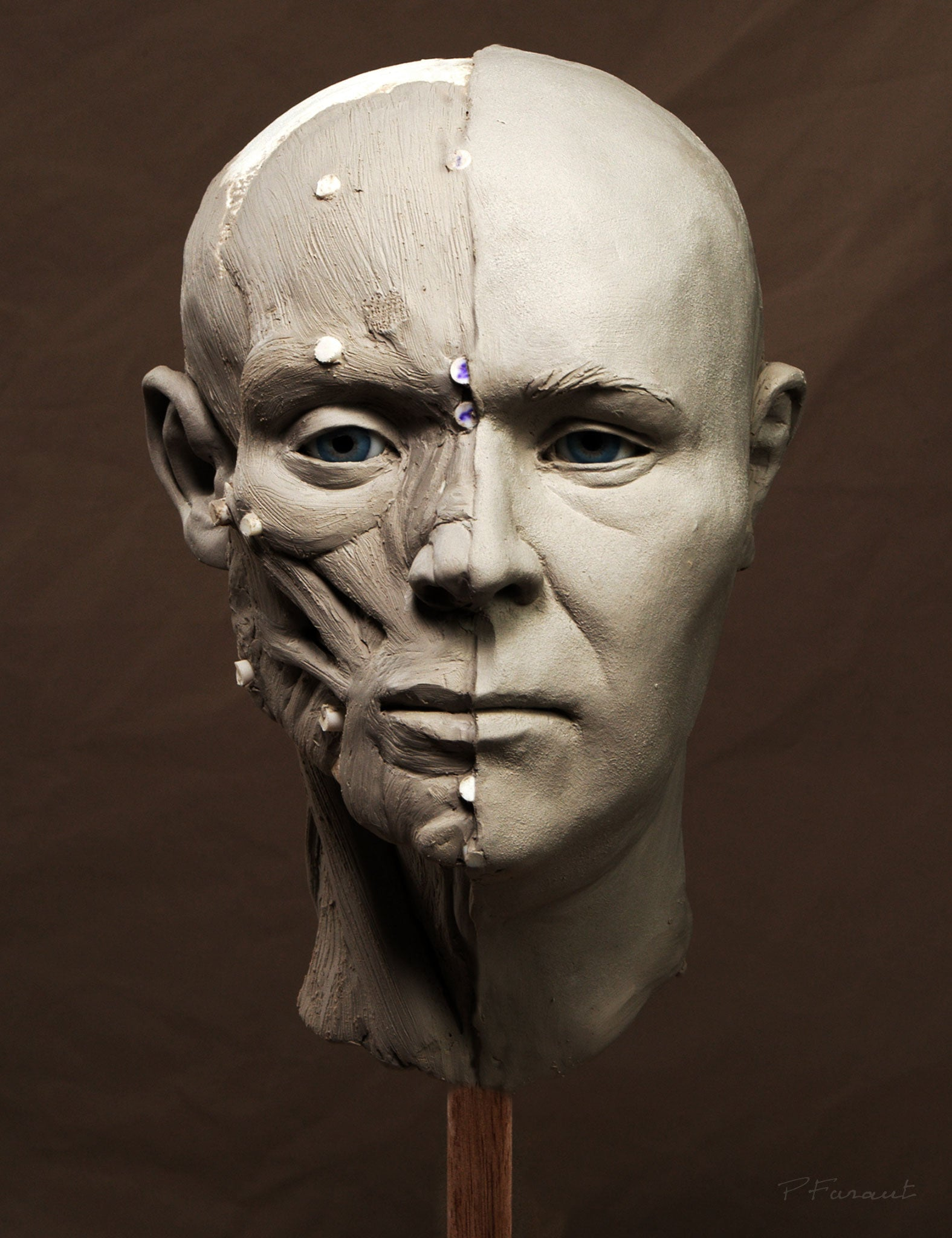 Forensic Reconstruction anatomical method by Philippe Faraut