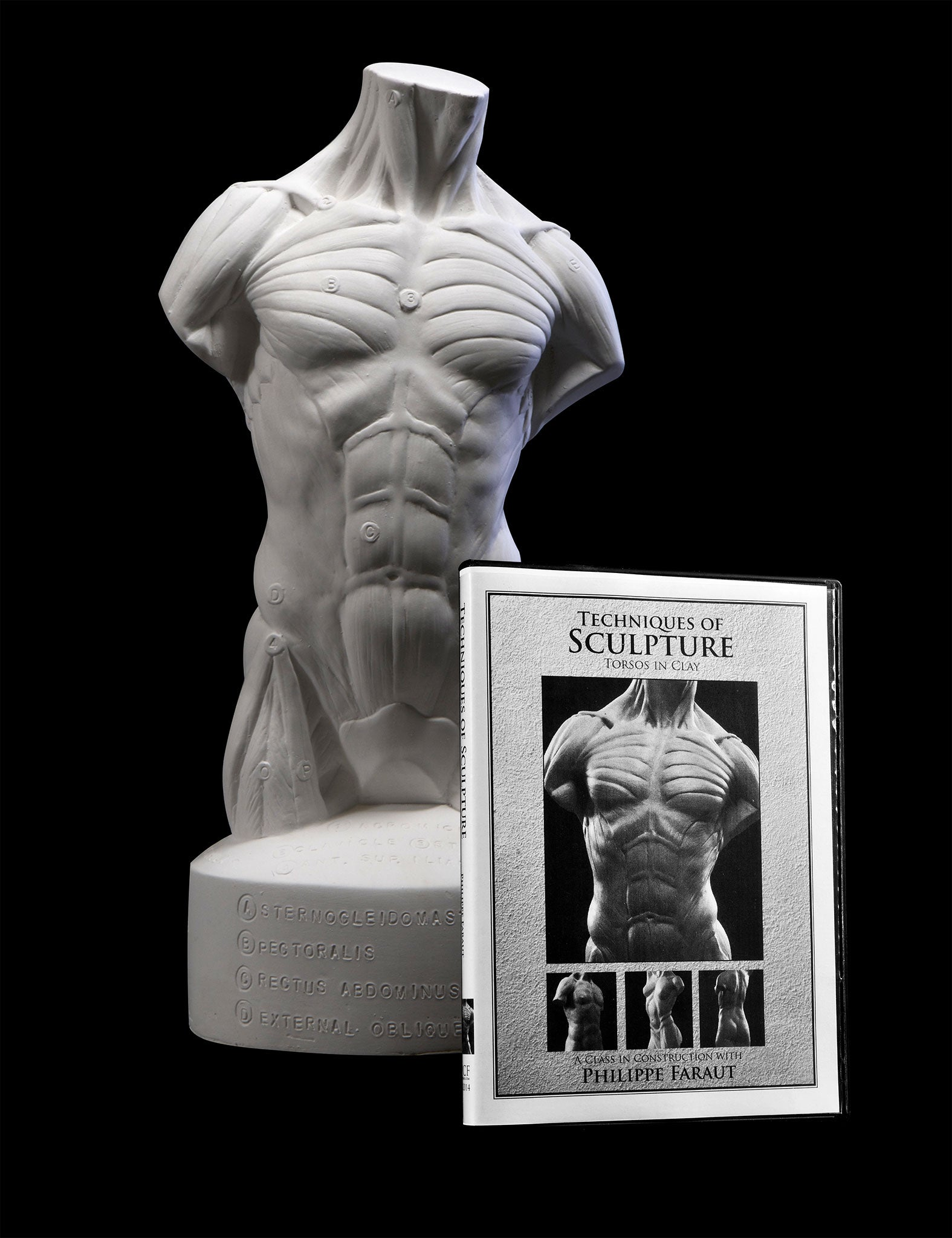 Plaster écorché torso with instructional sculpting dvd by Faraut