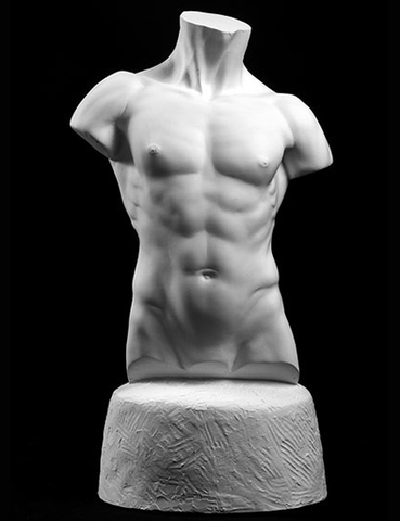 male torso art cast, male torso sculpture, plaster casts for artists, anatomical casts for artists, plaster cast models, torso art reference casts, torso drawing cast reference, torso cast drawing reference, male nude torso reference