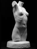 female torso art cast, female torso sculpture, plaster casts for artists, anatomical casts for artists, plaster cast models, art reference casts, drawing cast reference, cast drawing reference, nude torso reference