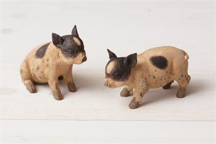 Pigs Sitting and Standing