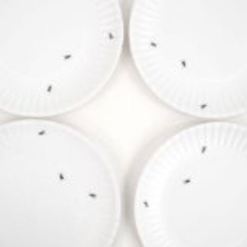 "180 Degrees ME0036 ""What Is It?"" Reusable White Dinner Plate with Ant Design, 9 Inch Melamine, Set of 4"