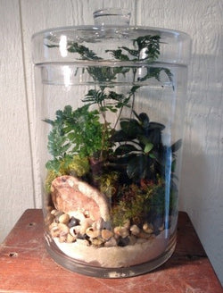 Terrariums { Sunday September 9th }10am-11:30am $25 + materials