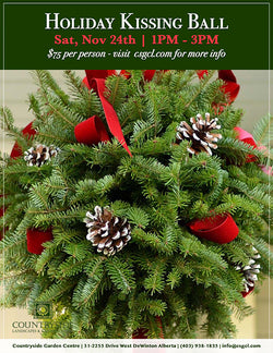 Holiday Kissing Ball Workshop {Saturday November 24th) 1PM - 3PM Workshops Okotoks Calgary Garden Alberta Landscaping Trees