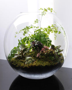 Terrariums | Sunday June 24 10:30AM - 11:30AM Workshops Okotoks Calgary Garden Alberta Landscaping Trees