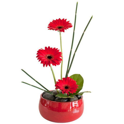 Round red ceramic container with black rocks and three red gerbs and green reeds.