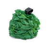 Dark Green Lacy Loofah (set of 12 Loofahs)