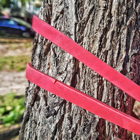 Resistance band anchored to a tree