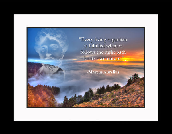 Marcus Aurelius Every living organism Poster, Print, Picture or Framed Photograph