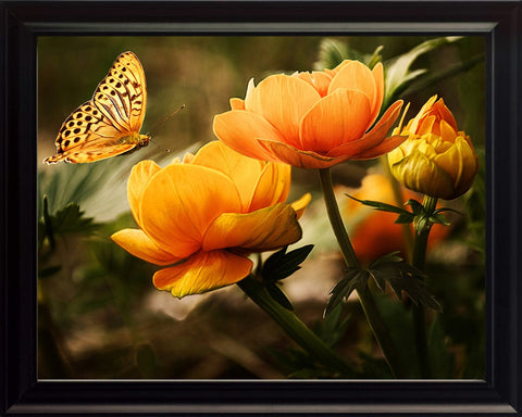 Butterfly Landing on Yellow and Orange Flowers, Wall Art 8x10 Framed Photo