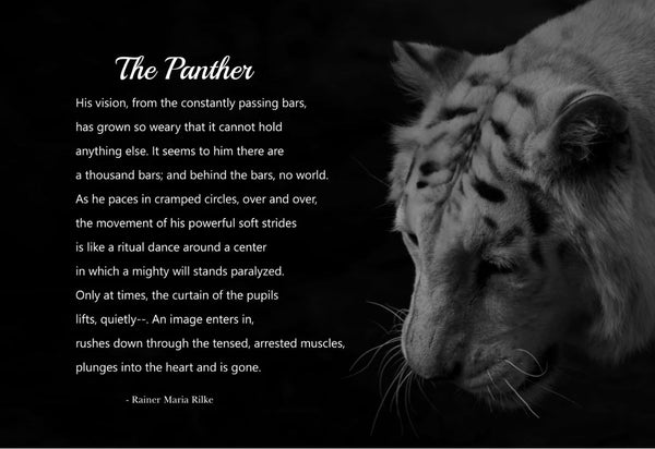 Rainer Maria Rilke The Panther Poster, Print, Picture or Framed Photograph