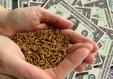 how much do feeder insects cost - man holding mealworms on a US currency background