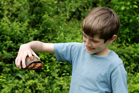 why you shouldn't take home wild reptiles and amphibians