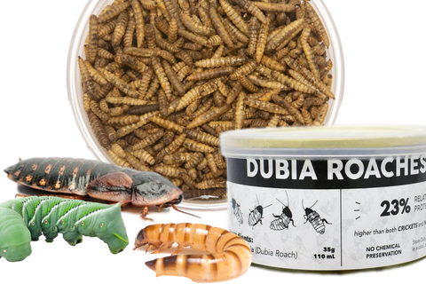 live insects vs canned insects vs dried insects comparison