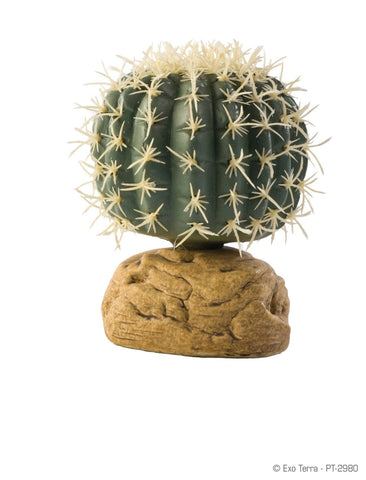 Exo Terra Barrel Cactus Small - DubiaRoaches.com