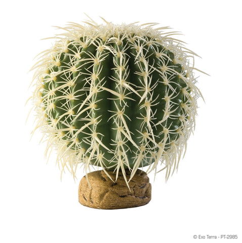 Exo Terra Barrel Cactus Medium - DubiaRoaches.com