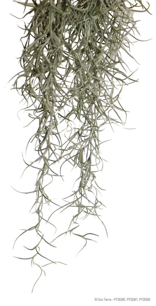 Exo Terra Spanish Moss Medium - DubiaRoaches.com