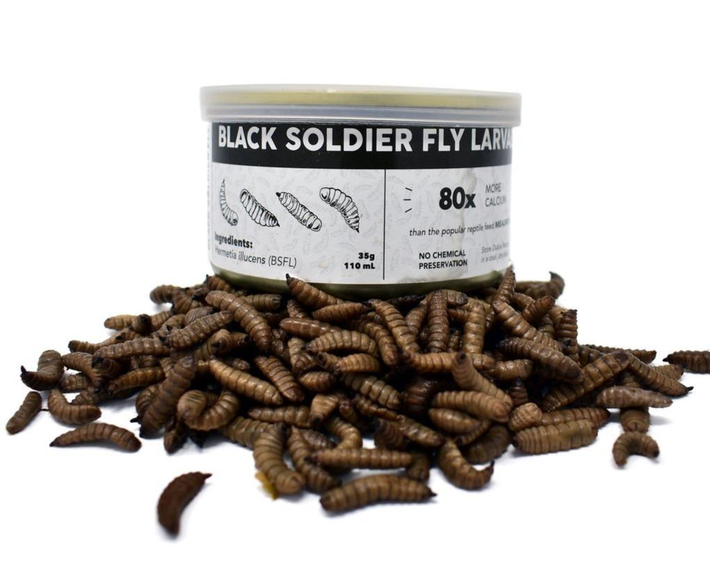 Canned Black Soldier Fly Larvae (Freshly Preserved) - DubiaRoaches.com