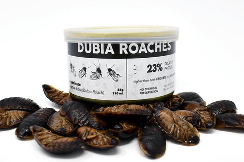 Canned Dubia Roaches (Freshly Preserved) - DubiaRoaches.com