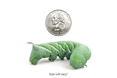 Large Hornworms (Cupped)