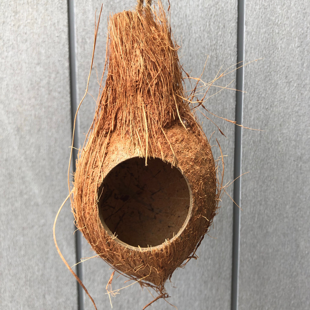 Hanging Hollow Coconut