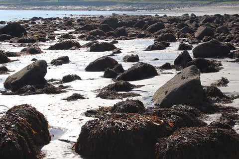 Wild Atlantic Seagarden protect Irish seaweed