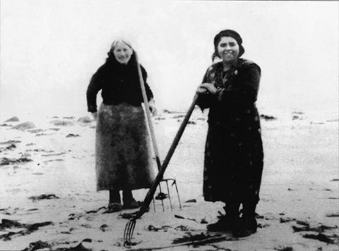 Erris Women in County Mayo, gathering Seaweed.