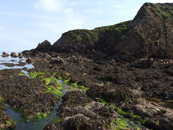 Seaweed resources in Irish rural coastal communities