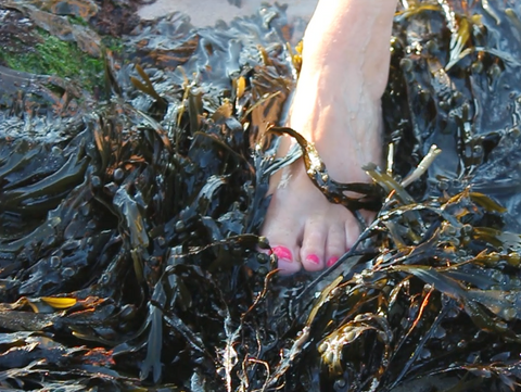 Seaweed on Holiday, feet in seaweed