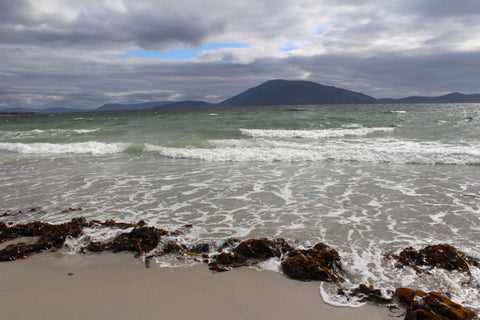 Wild Atlantic Seagarden, Irish seaweed