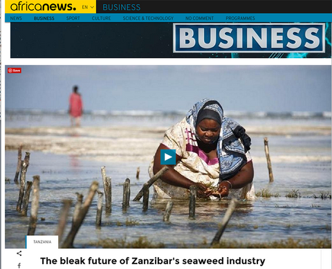 Climate change affects seaweed crop in Zanzibar