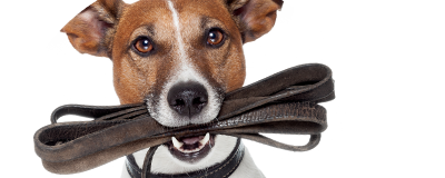 Only 7 days special offers Up to 30% on all dog leads