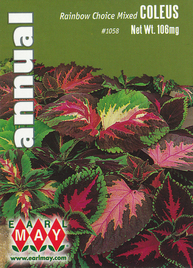 Rainbow Choice Mixed Coleus Seeds